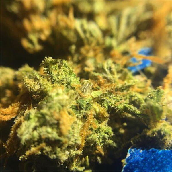 Buy Weed France Online